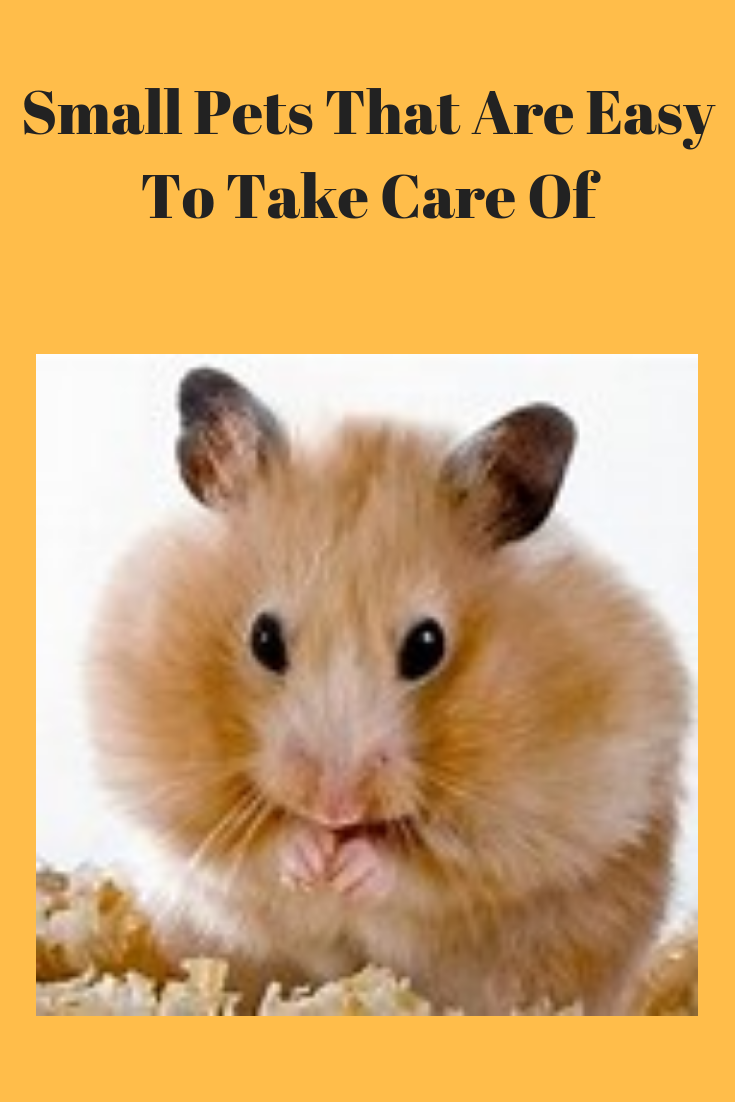 Small Pets That Are Easy To Take Care Of Pets Care Tips Small Pets Low Maintenance Pets Pets