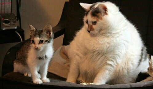 Fat cat and kitten