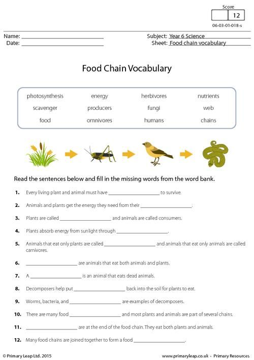 Food Chain Vocabulary Worksheet Food Chain Biology Worksheet Food Chain Activities