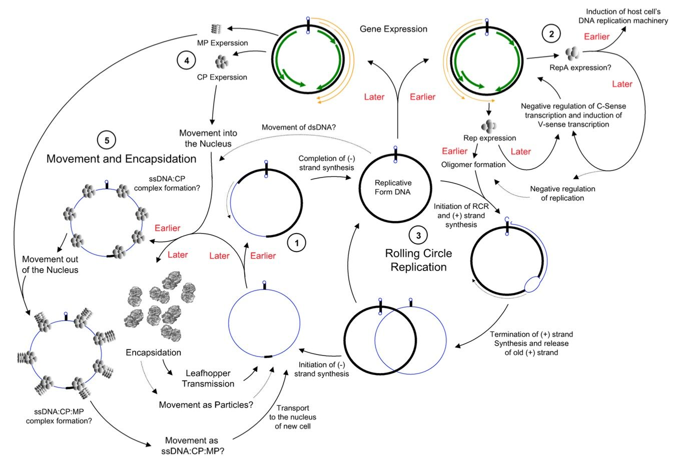 Virus Origins From What Did Viruses Evolve Or How Did