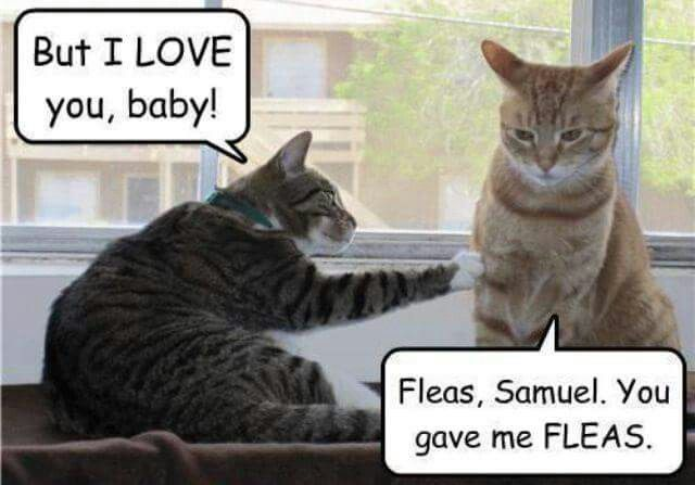 But I Love You Baby Fleas Samuel You Gave Me Fleas Funny Animal Pictures I Love Cats Funny Animals