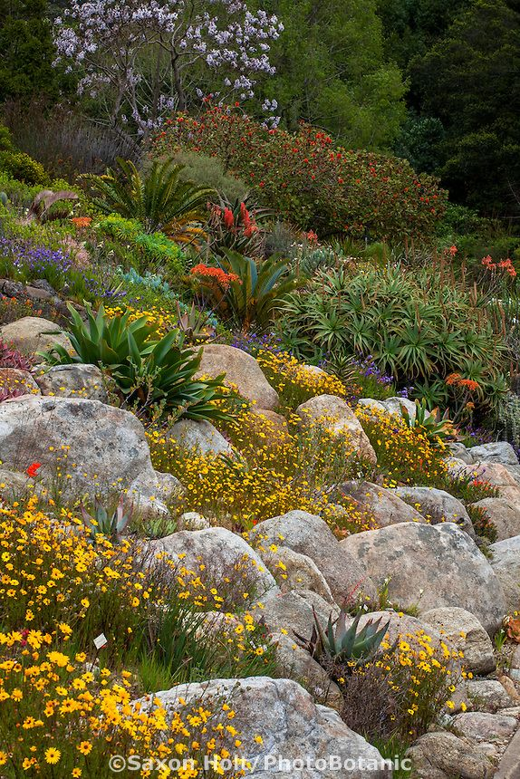 Holt_1204_0409   PhotoBotanic Stock Photography Garden Library