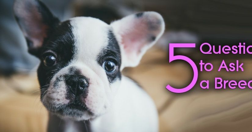 5 Questions To Ask A Breeder Before Buying A Dog Wag The Dog