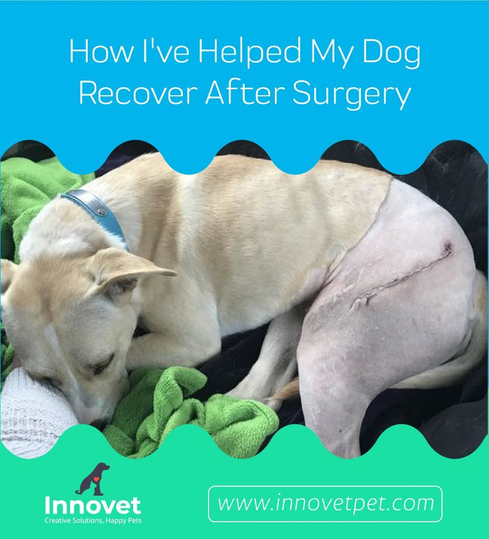 How I've Helped My Dog Recover After Surgery Dog
