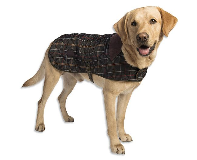 Just Found This Barbour Tartan Nylon Dog Jacket Barbour - 26 dogs puppyhood photos