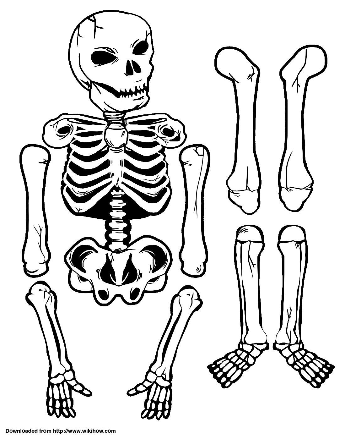 image regarding Printable Skeletons referred to as Printable Skeleton - wikiHow Halloween Skeleton, Collage