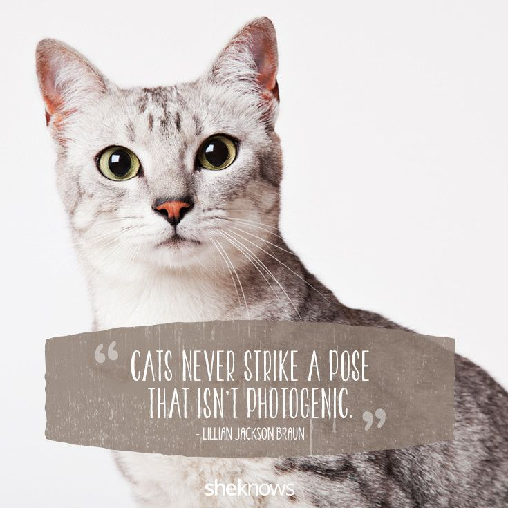Quotes About Cats Glamorous 50 Cat Quotes That Only Feline Lovers Would Understand  Little