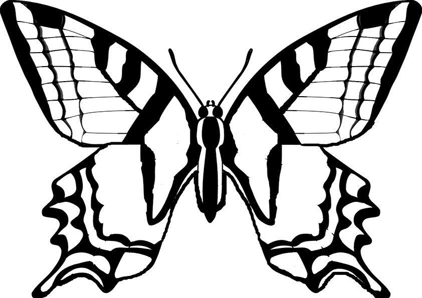 schmetterling malvorlage 07 | Tricks | Pinterest | Schmetterlinge ...