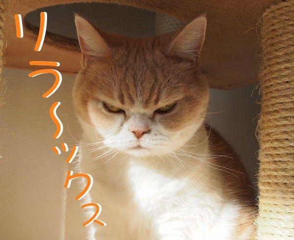 โคะย ก แมวเซเลปหน าบ ง ท ใครเห นเป นต องย ม ต มยำวาซาบ It S All About Japan ญ ป น By บ ญจ ง ล กแมว ญ ป น