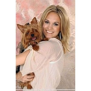 Singer Carrie Underwood & her Yorkie  #dogs #pets