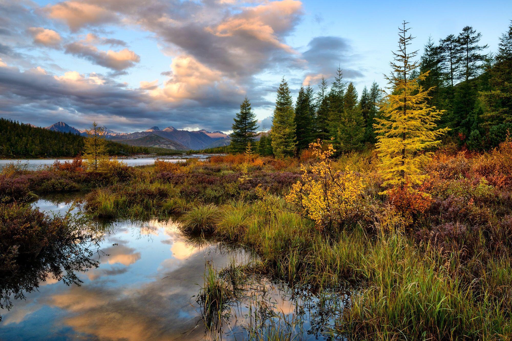 отличие серой природа якутии золотая осень картинки гарнир лучше