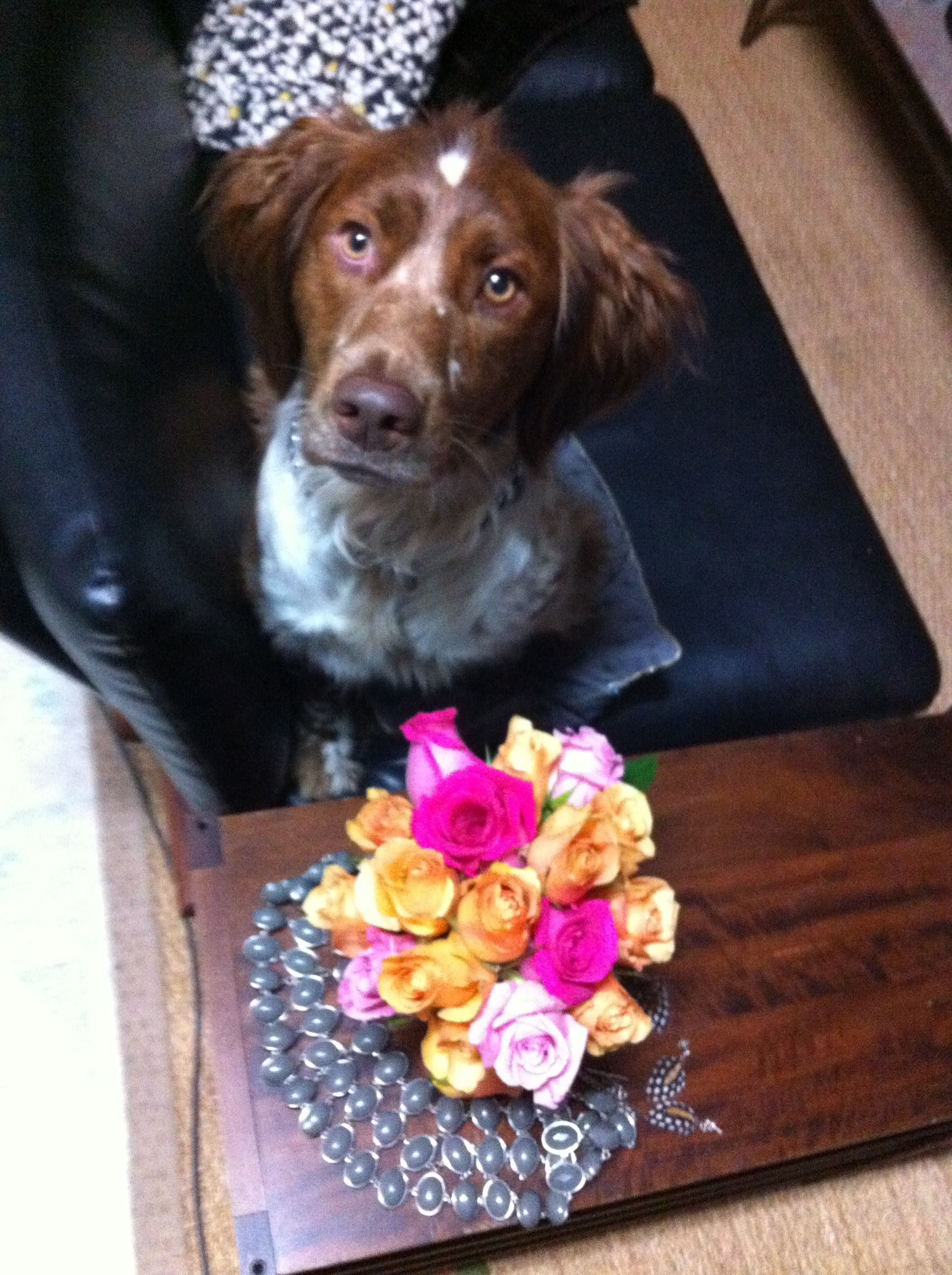 My dog loves flowers too..:)