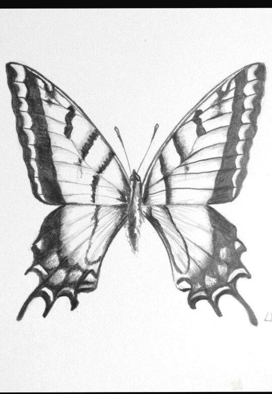 butterfly coloring pages colouring adult detailed advanced