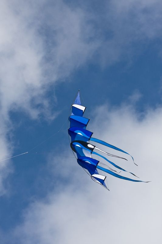 Impress your friends on the beach this summer - fly one of our awesome designer kites! $169.99