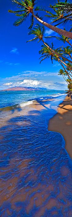Maui palms Greeting Card for Sale by James Roemmling