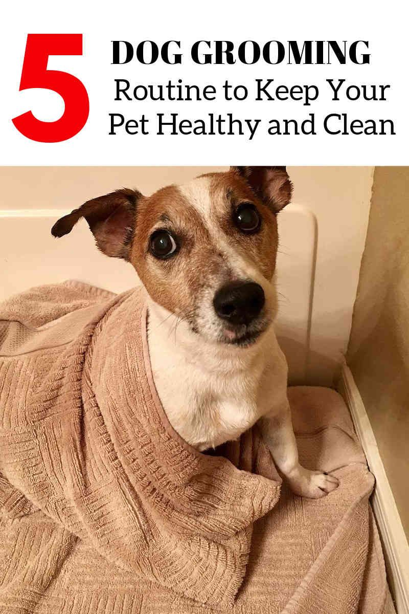Basic Dog Grooming Supplies And Also Devices Dog Grooming Tips