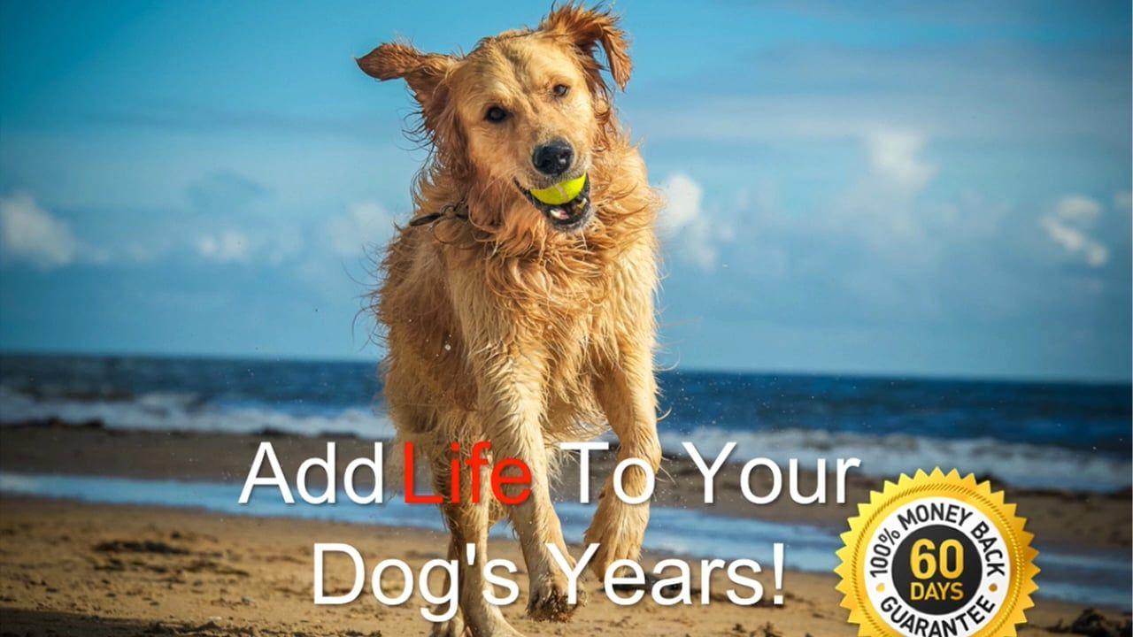 Dog dental care dog dental care dog care assistance dog