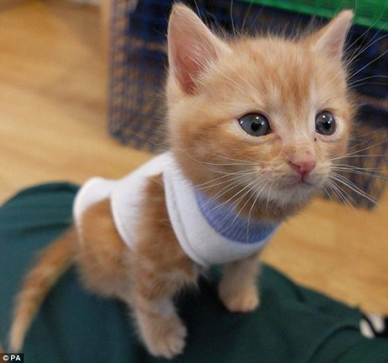 Abandoned Kittens Rescued By Rspca Wearing Baby Socks As Coats
