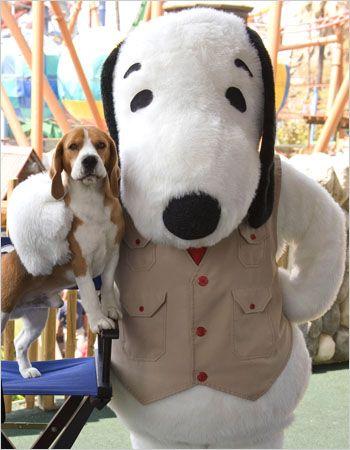 Beagle Proves To Be Dog Show S Best Friend Beagle Buddies Cute