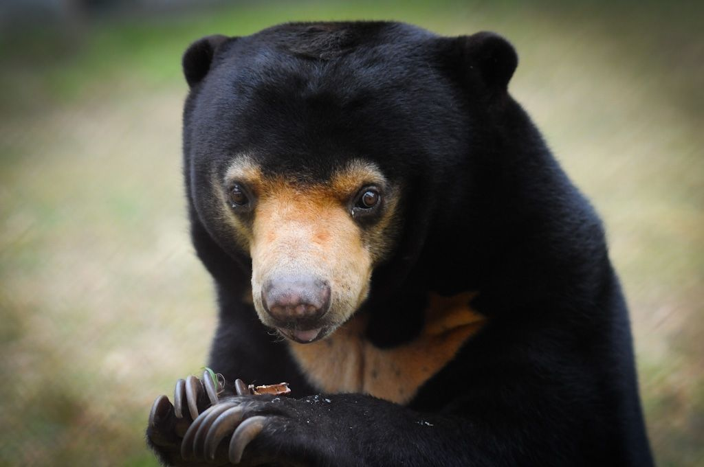 Moon Bear Rescue in China via Animals Asia.org
