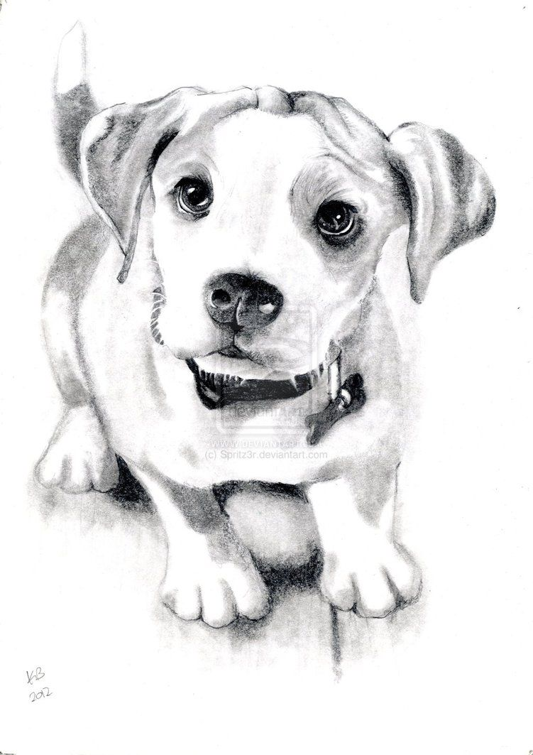 Dog sketch for the most local dog grooming