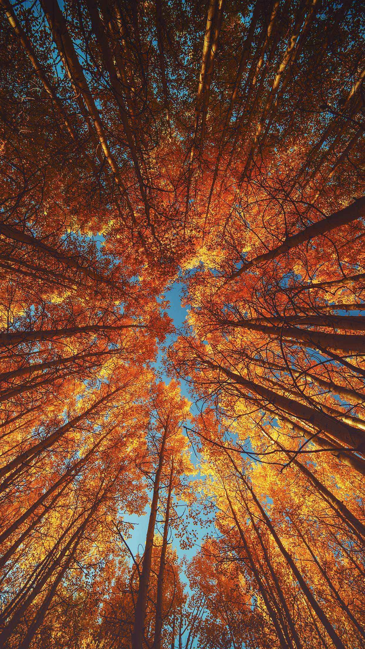 Iphone Xr Wallpaper Autumn in 2020 Wallpaper iphone