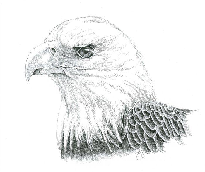 Realistic Eagle Drawing Realistic Eagle Head Drawings Bald Eagle