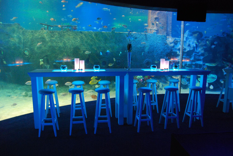 turkuazoo istanbul aquarium Bing
