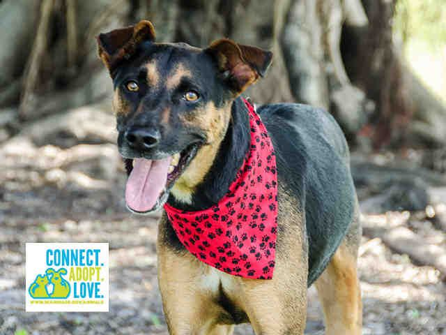 Ronnie Has Few Days Left To Live Dog Status Dog Id Mixed Breed