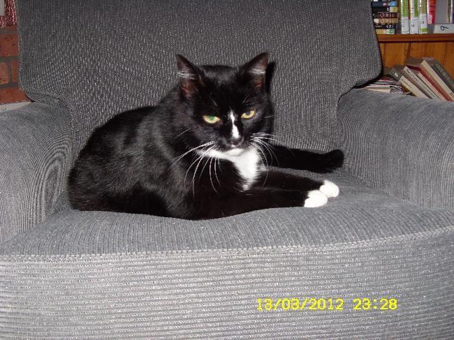 Cat sitter House Sitter Needed Gillieston Heights, Hunter