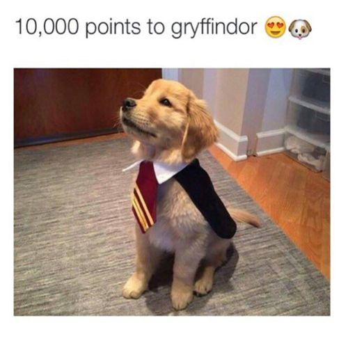 If you went to Hogwarts, what would your favorite subject be? Comment below! Love Harry Potter? Visit us: WorldOfHarry.com #HarryPotter #Harry_Potter #HarryPotterForever #Potterhead #harrypotterfan #jkrowling #HP