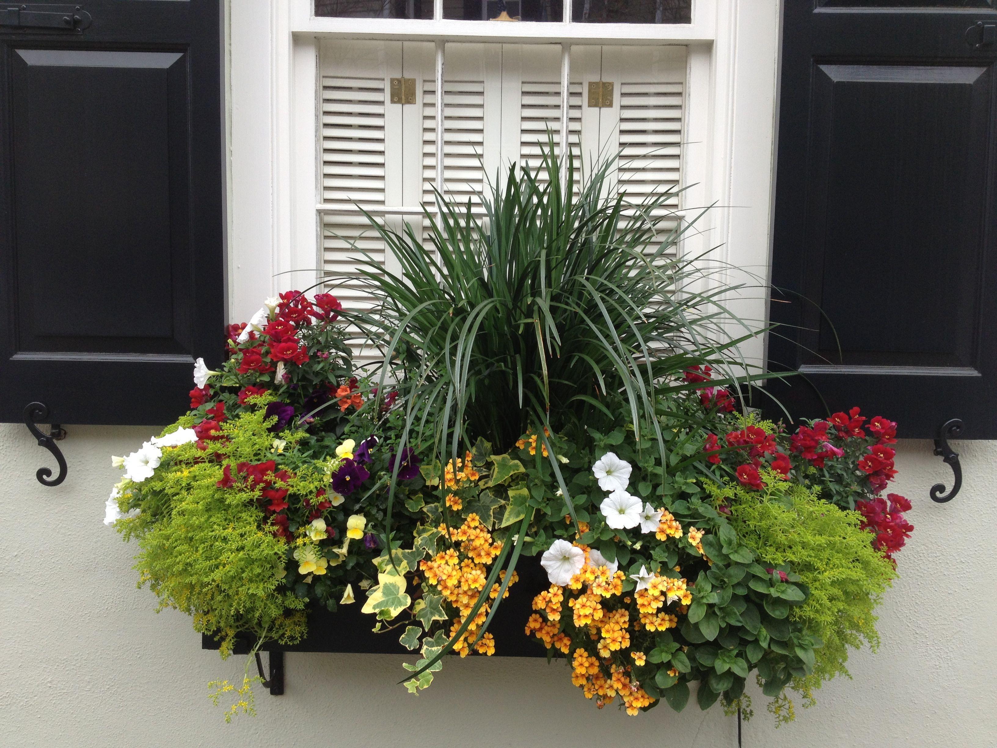 Charleston Style Gardens   Charleston Window Boxes