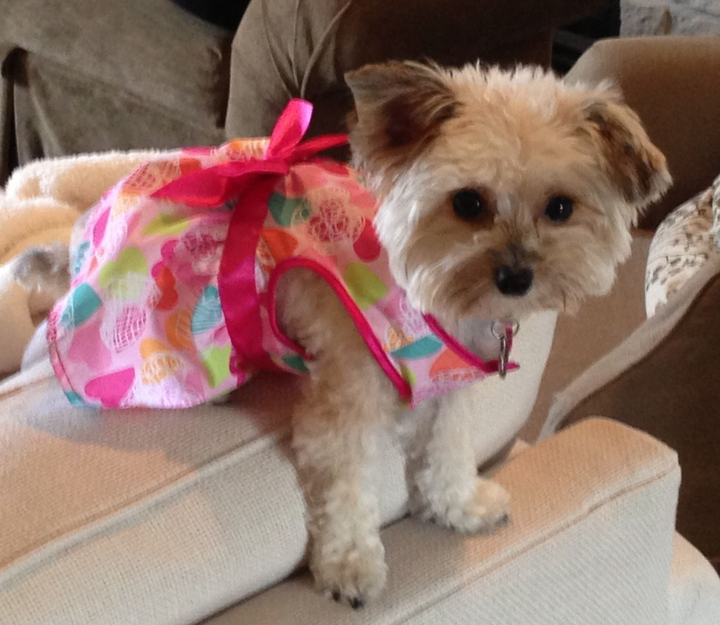 Cute puppy clothes for Yorkie Poo Dog clothes, Puppy