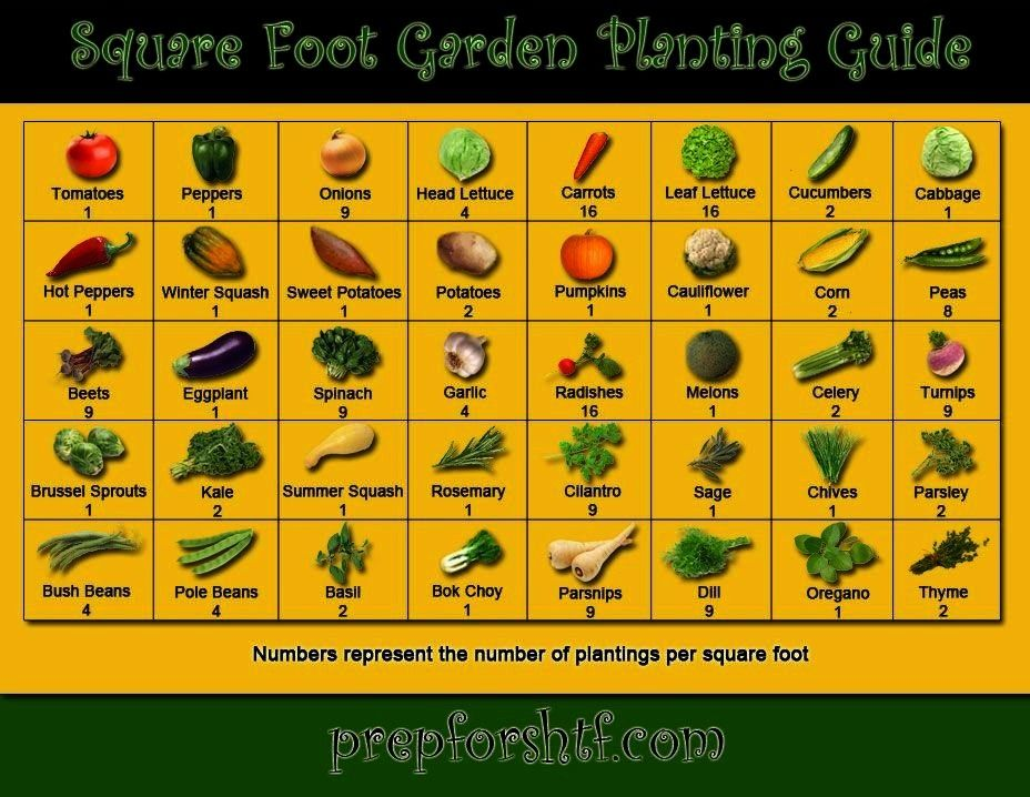 plants require as much or as little space as others Plant the correct number of seeds in each square to maximize your garden while not harming the growth of each plantNot...