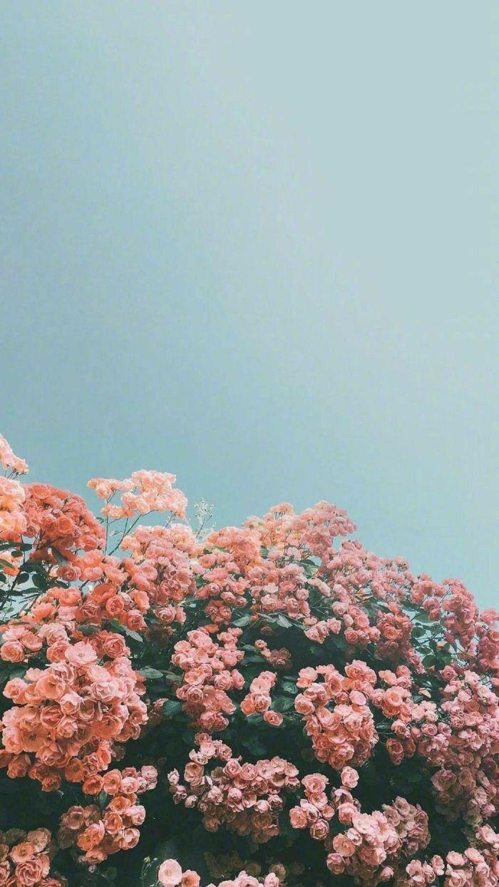 #freetoedit #remixit #flowers #pink #blue #sky #summer #spring #vibes #vintage #edit #aesthetic #background