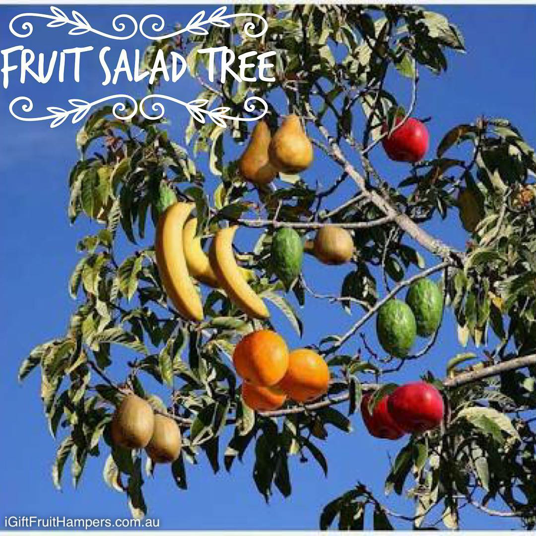 Like If You Wish You Could Grow One Of These Fruit Salad Trees Fruittree Fruitsaladtree Fruit Fruit Cocktail Tree Fruit Salad Tree Grafting Fruit Trees