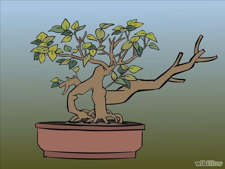 Cómo podar un bonsai: 7 pasos (con fotos) - wikiHow