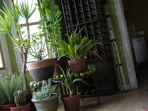 Decorating with houseplants.