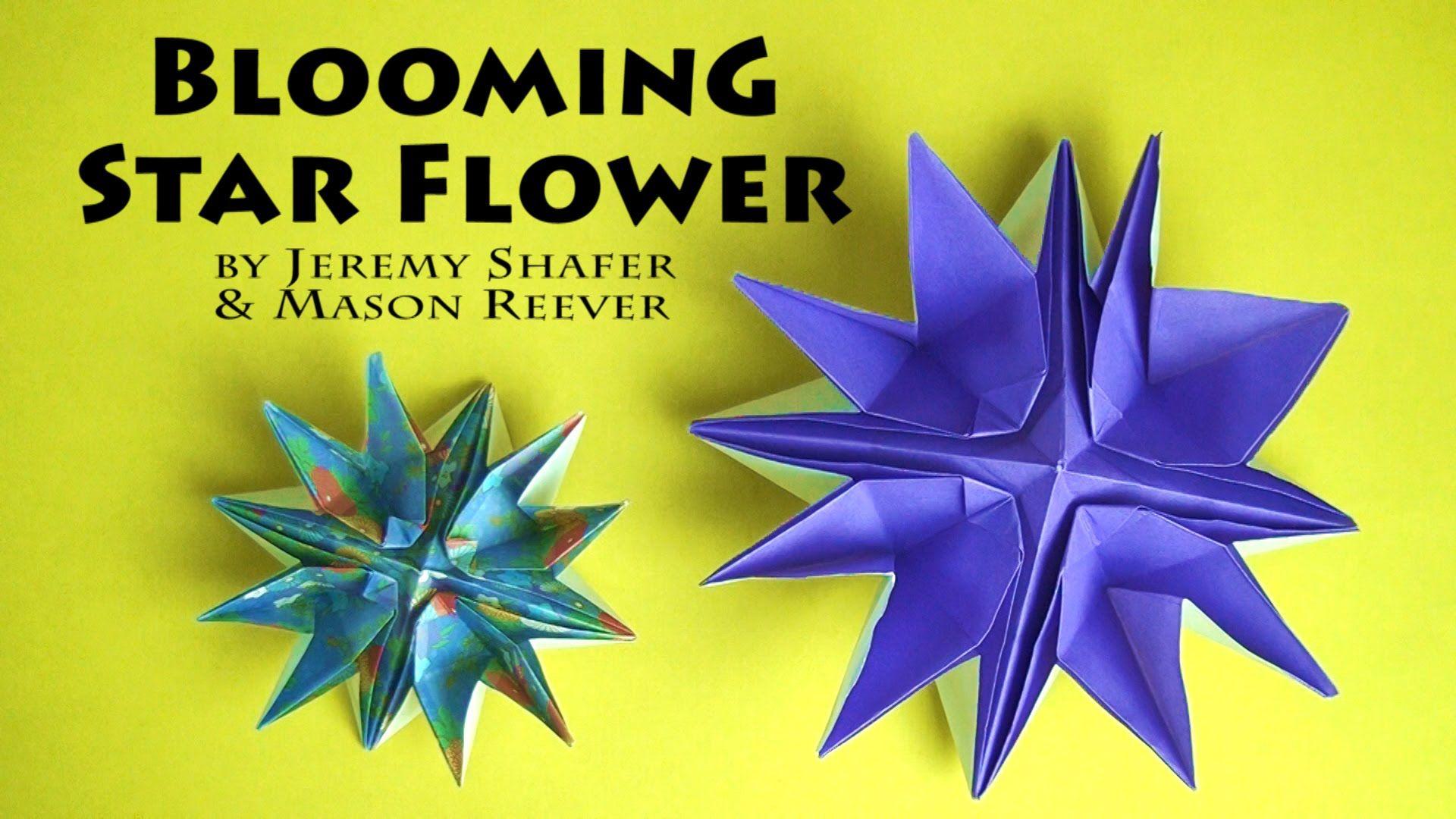 Blooming star flower christmas toys pinterest star flower blooming star flower mightylinksfo Gallery
