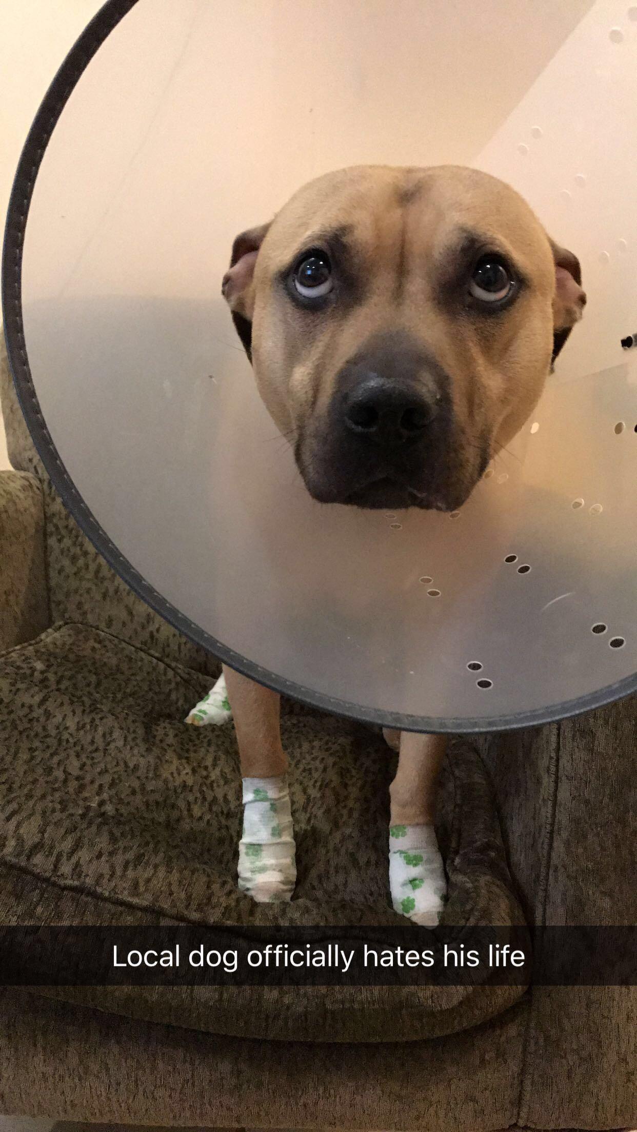 Pupper went too hard at the dog park iftrmbli cute uc