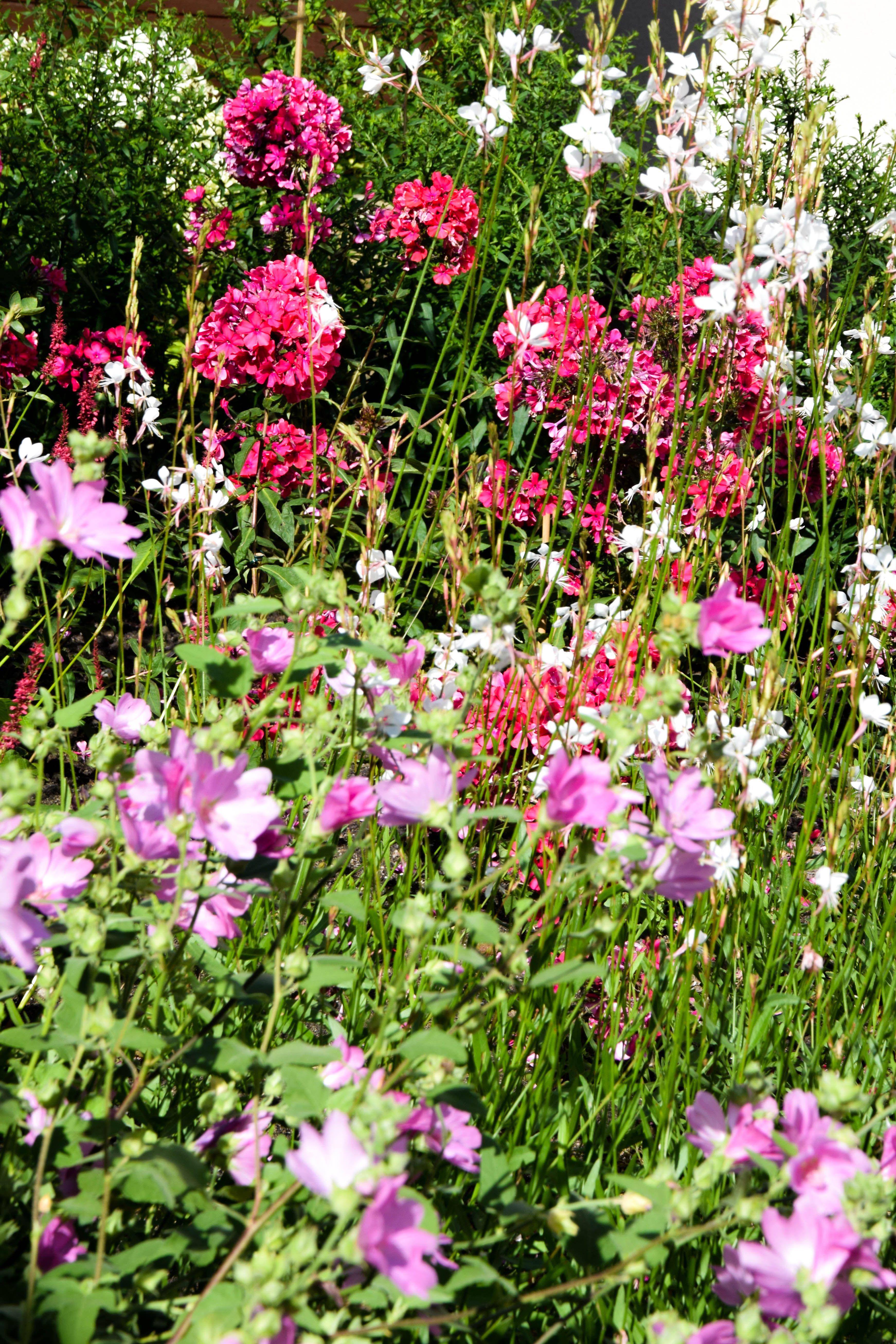 Bloementuin wilde beplanting roze wit vaste beplanting for Www bloem en tuin nl