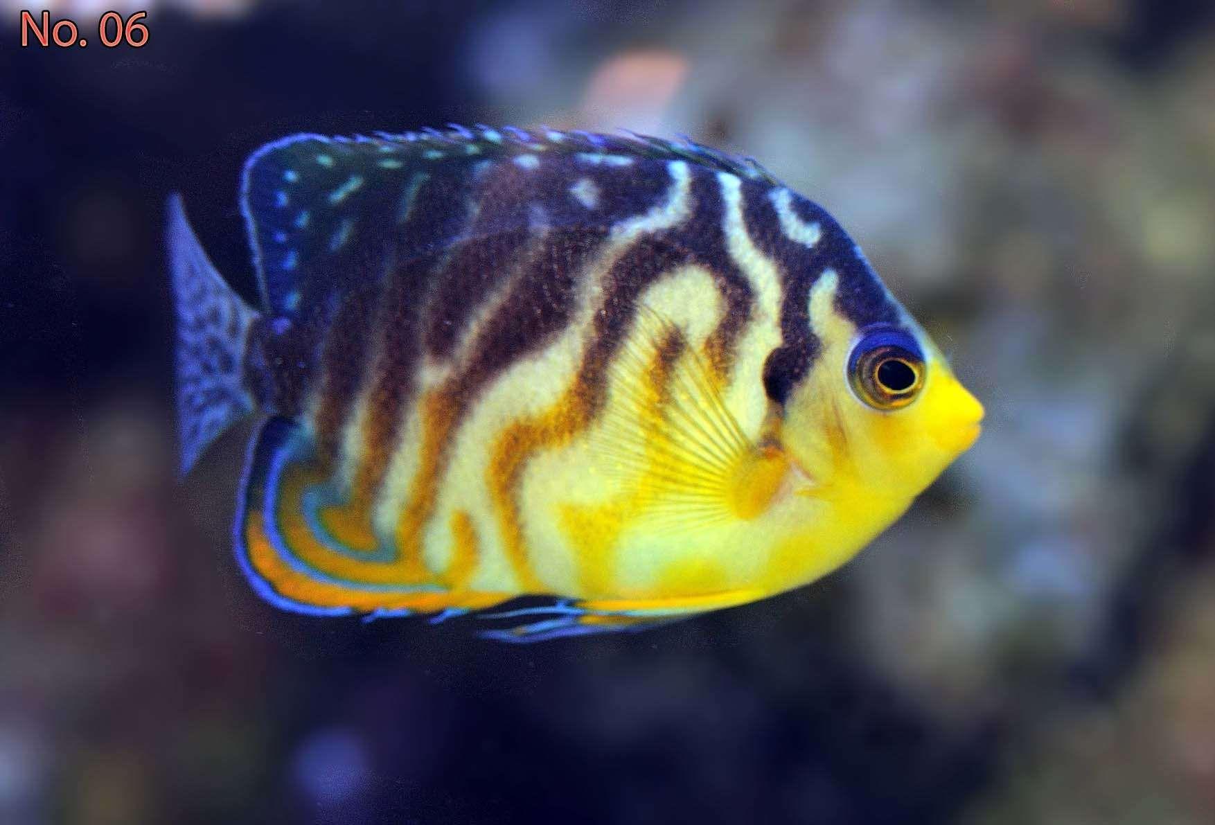 Neptune Grouper Fish Pet Marine Life Animals