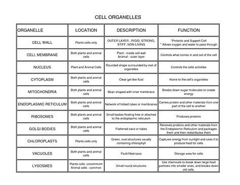 Image result for Cell Organelles and Their Functions Chart ...