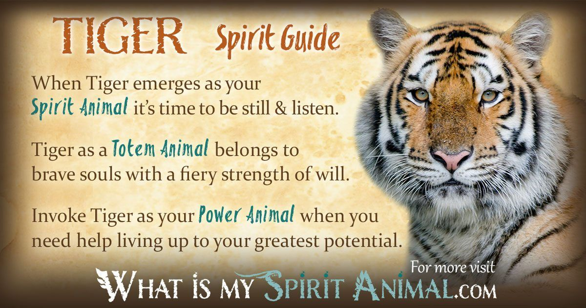 Tiger Symbolism Meaning Power Animal American Symbols And Totems
