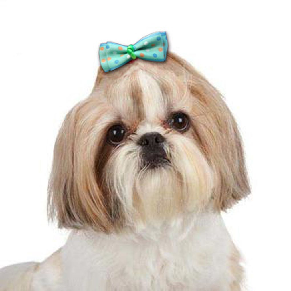 Cool Hair Bows Bow Adorable Dog - 5738a2dab7c95a70cc4c3415b85e3462  2018_48177  .jpg