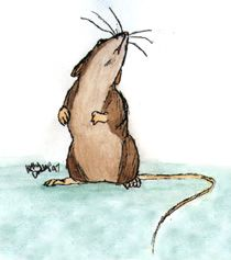 field mouse drawing - Google Search
