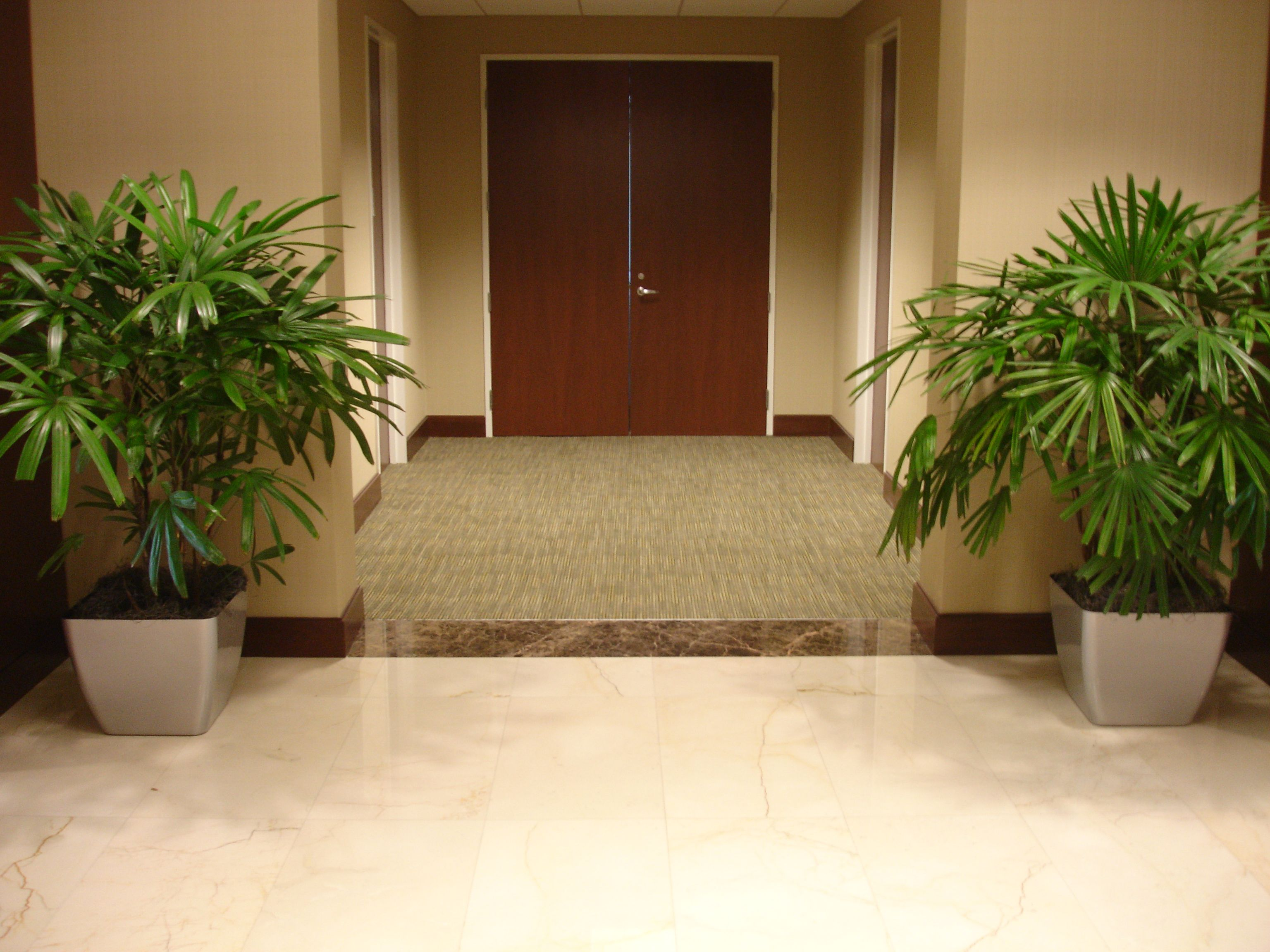 Hallway leading to the ladies rooms - Raphis Palms Aka Lady Finger Liven Up An Empty Hallway