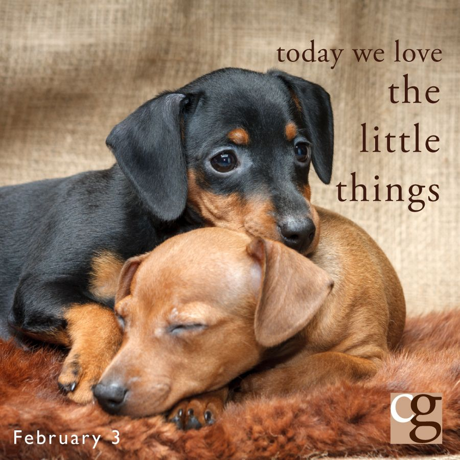 Something to Love Today caregiver cute puppies