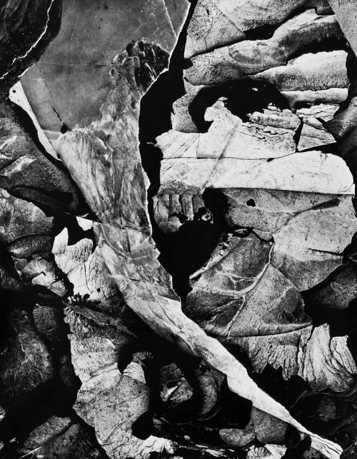 Minor White, Capitol Reef, Utah, Moencopi Strata, Late June 1962
