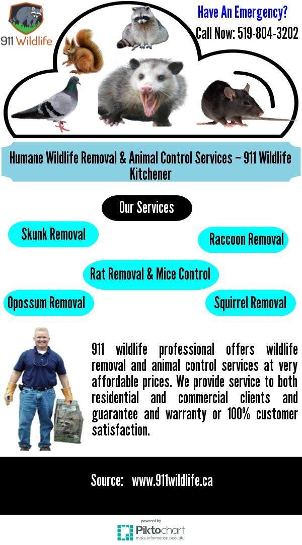 wildlife removal professional